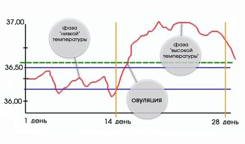 Правила определения базальной температуры