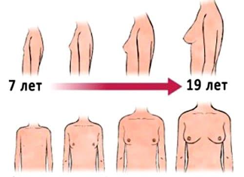 Как развивается женская грудь с течением времени