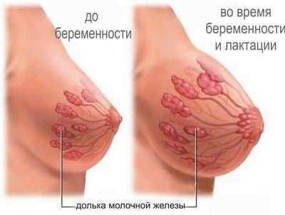 Уменьшение груди после выкидыша носит физиологический характер