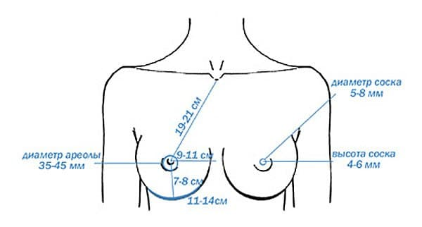 Параметры идеальной женской груди