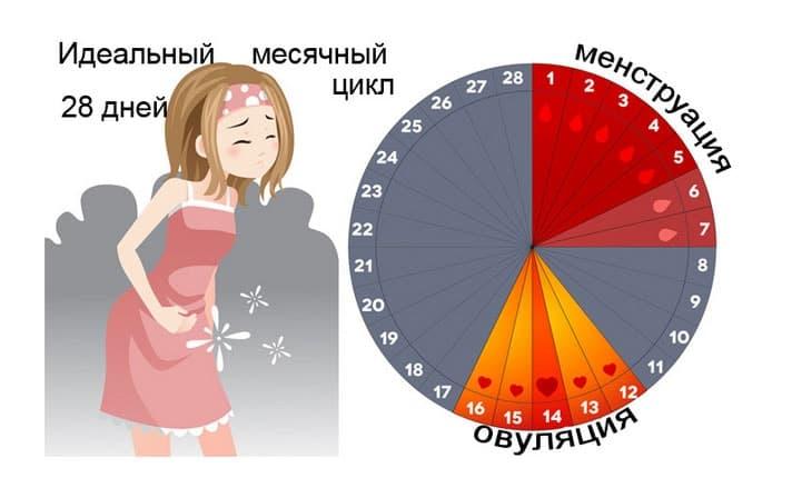 Девушка из девочки: особенности менструального цикла в 12 лет