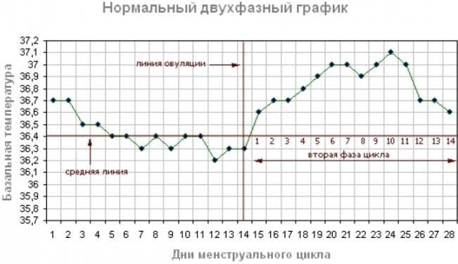 Считать овуляцию можно и по методу измерения базальной температуры – более надежному, чем календарный