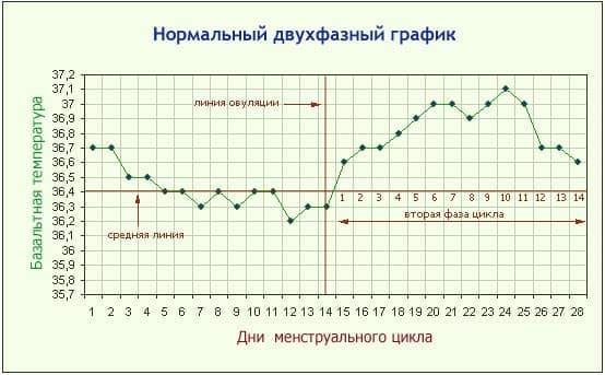 Базальную температуру измерять лучше утром, сразу после сна. А данные заносить в таблицу или график.